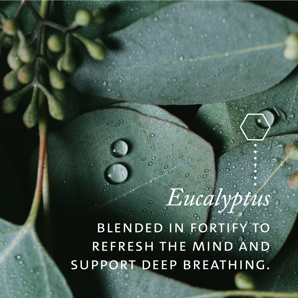 Eucalyptus blended in Fortify to refresh the mind and support deep breathing.