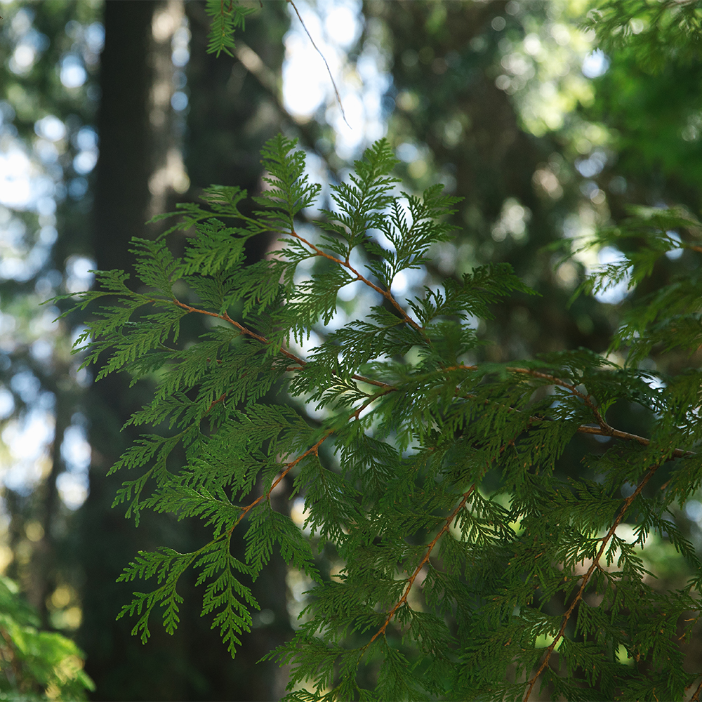 Natural Wellness Products - A tree in nature