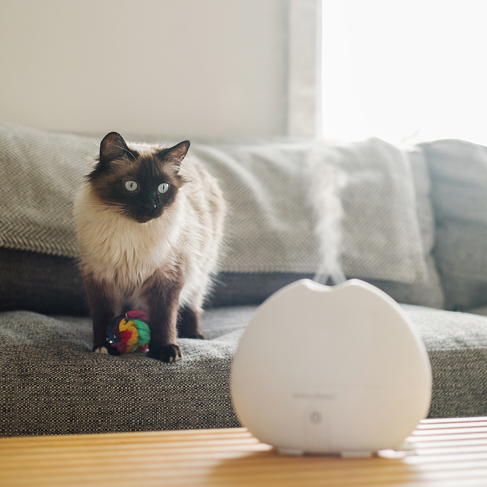 Cat in a room with a diffuser