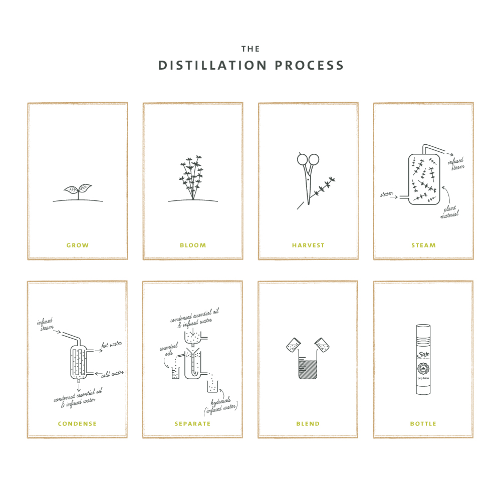 The distillation process for essential oils.