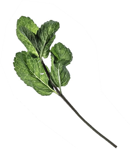 Botanical Leaf